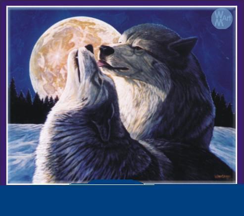 animales tiernos - amor de lobos